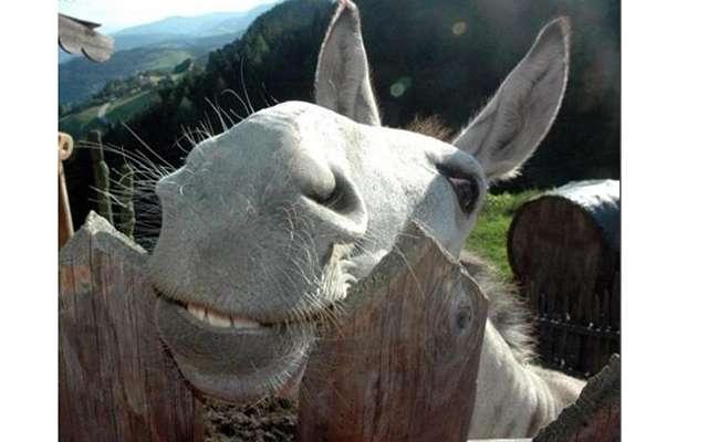 Животные тоже умеют смеяться.