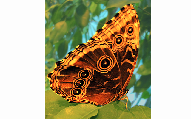 Из фотозала. Макро бабочки