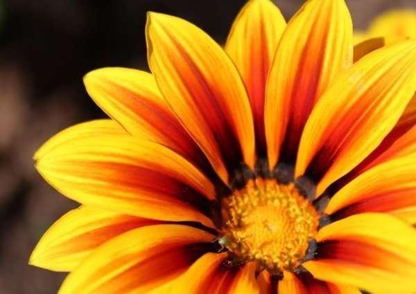Цветные цветы. Оранжевый