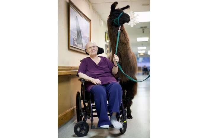 Ламотерапия
