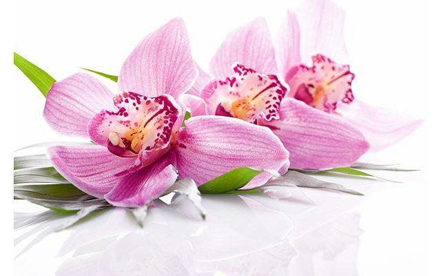 Нероли и Орхидея – весеннее пробуждение Грасса